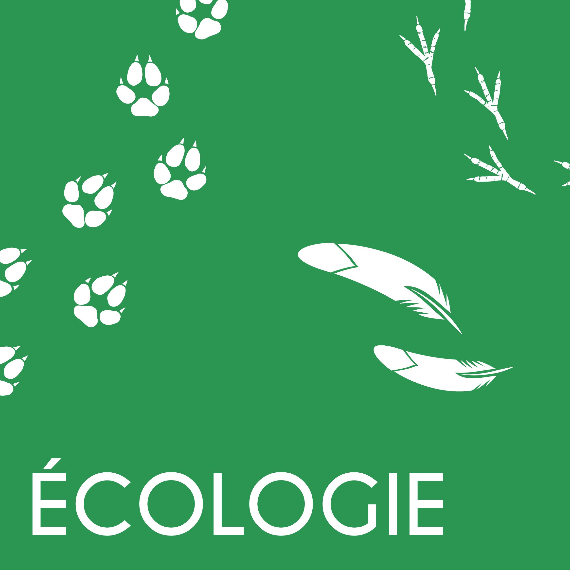 LS_mail_carré Ecologie
